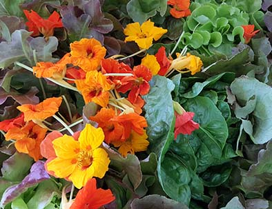 fleurs du potager fruit frais du sud ouest barbaste
